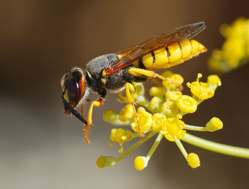 Wasp_August_2007-12